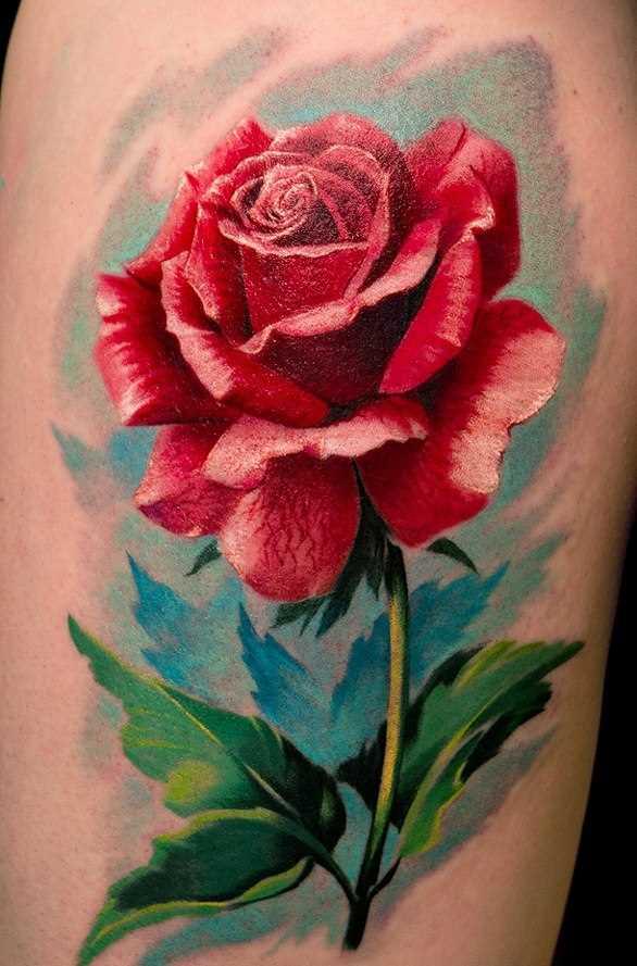 Bela tatuagem no ombro da menina - rosa vermelha