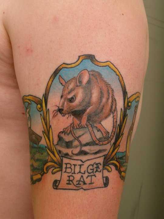 Cores de tatuagem no ombro de um cara - de- rato e inscrição