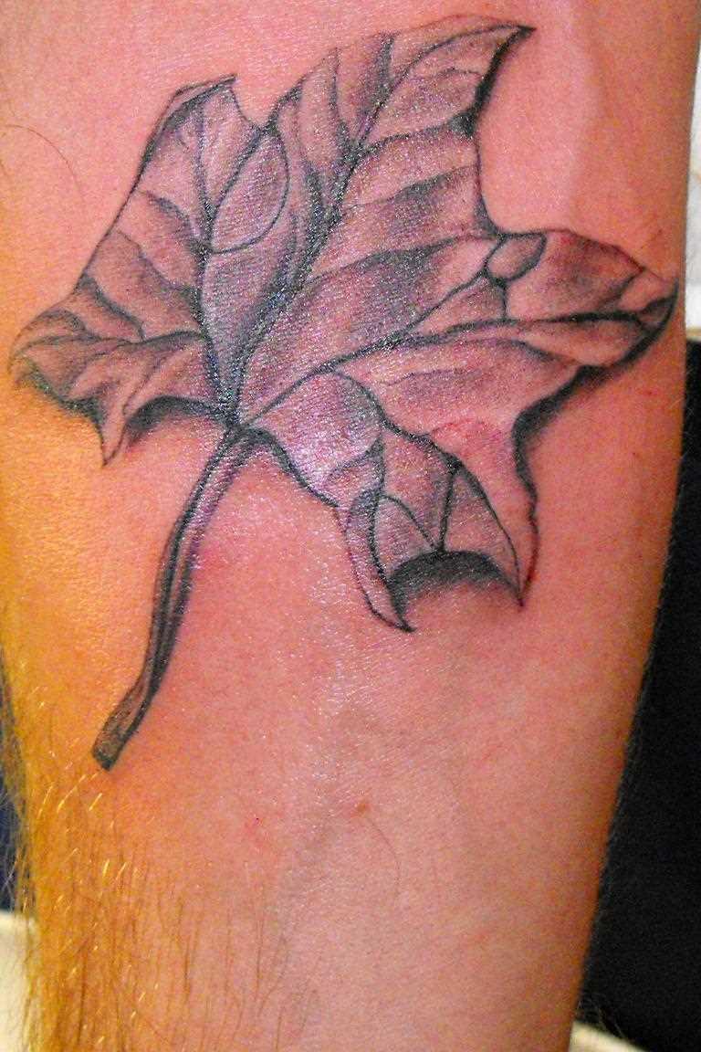 Tatuagem no antebraço cara - a folha